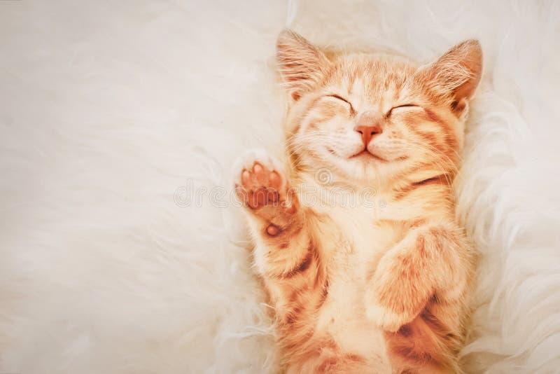 Το γατάκι πιπεροριζών αύξησε το πόδι του επάνω σε ένα όνειρο Η έννοια της επιλογής και της ψηφοφορίας στοκ φωτογραφία