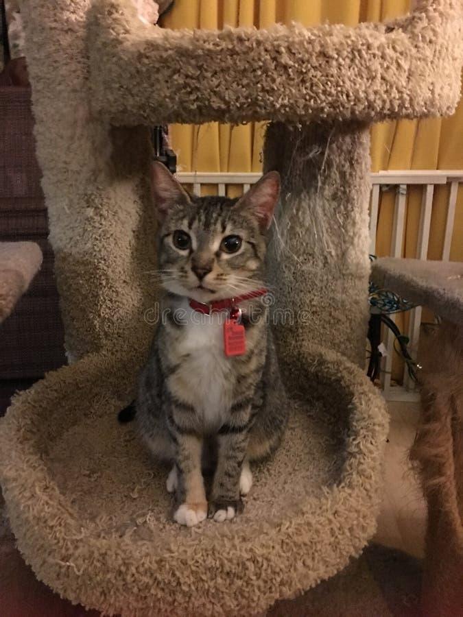 Το γατάκι λυγξ μου στοκ εικόνες με δικαίωμα ελεύθερης χρήσης