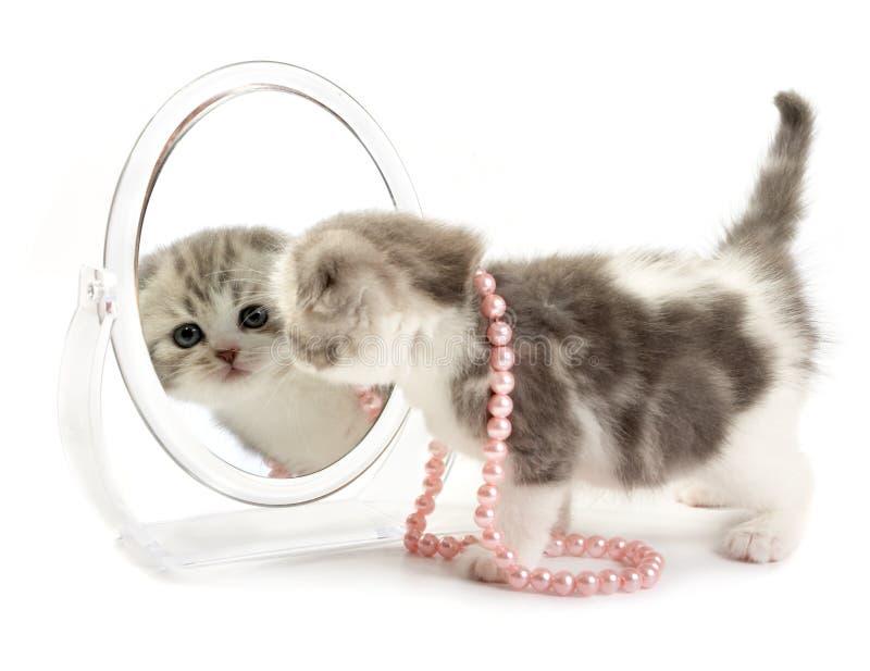 το γατάκι φαίνεται καθρέφτης στοκ φωτογραφία με δικαίωμα ελεύθερης χρήσης
