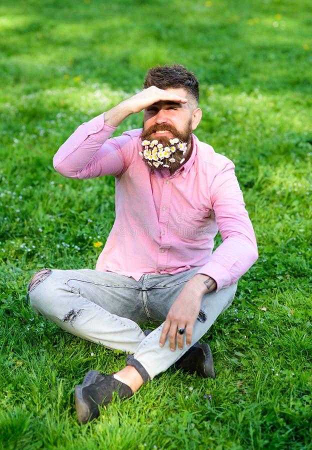 Το γενειοφόρο άτομο με τα λουλούδια μαργαριτών κάθεται στο grassplot, υπόβαθρο χλόης Το άτομο με τη γενειάδα στο πρόσωπο χαμόγελο στοκ εικόνα με δικαίωμα ελεύθερης χρήσης