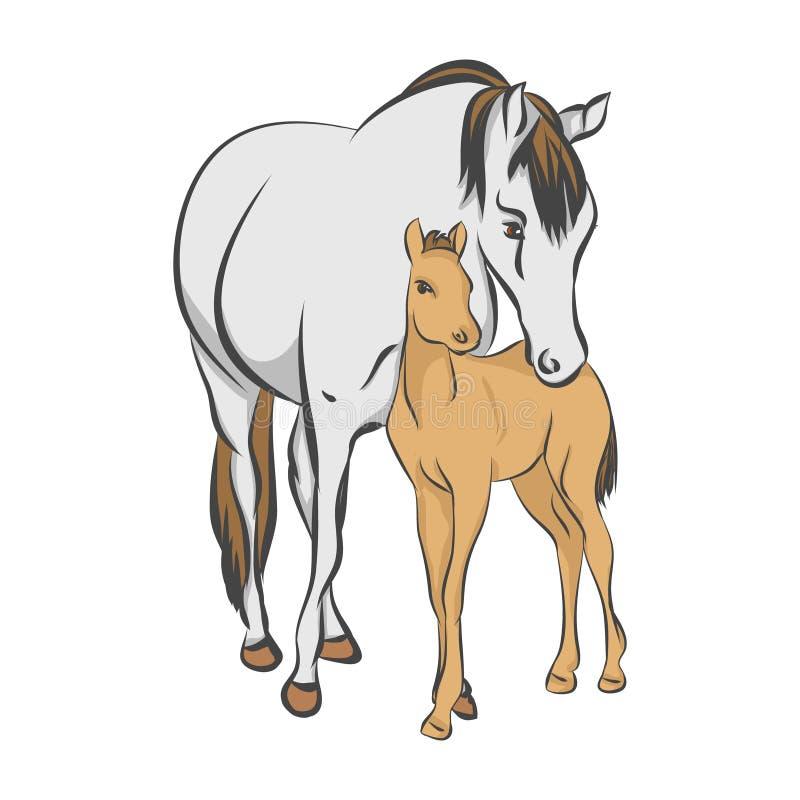 Το γκρίζο άλογο και foal της απεικόνιση αποθεμάτων