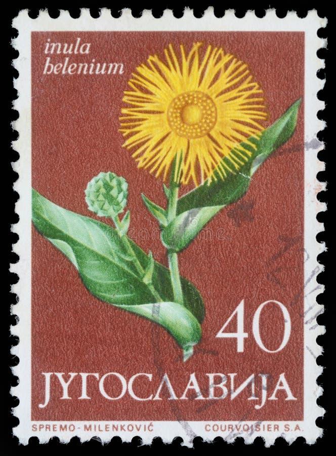Το γραμματόσημο που τυπώνεται στη Γιουγκοσλαβία παρουσιάζει elecampane στοκ φωτογραφίες