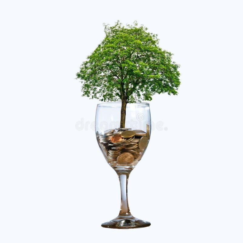 Το γυαλί νομισμάτων δέντρων απομονώνει το δέντρο νομισμάτων χεριών που το δέντρο αυξάνεται στο σωρό Χρήματα αποταμίευσης για το μ στοκ φωτογραφία με δικαίωμα ελεύθερης χρήσης