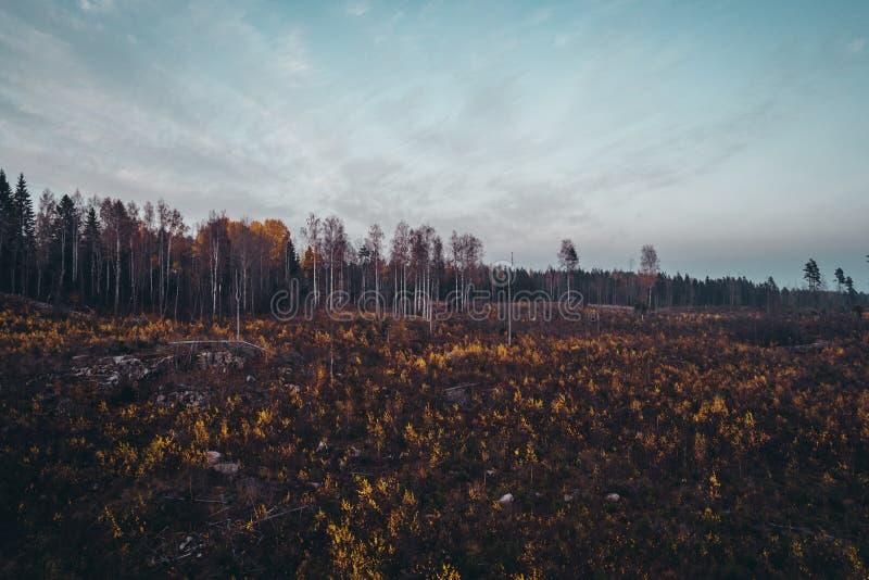Το δάσος που ήταν με τις εγκαταστάσεις αυξανόμενος, Φινλανδία στοκ φωτογραφία με δικαίωμα ελεύθερης χρήσης