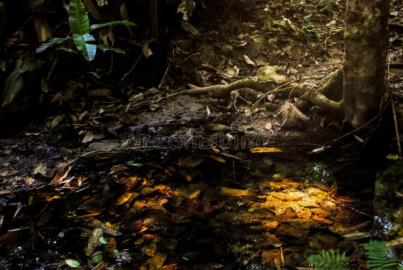 Το δάσος στο Sri κάθισε το εθνικό τοπίο πάρκων NA Lai Cha, Sukhothai, Ταϊλάνδη στοκ εικόνες