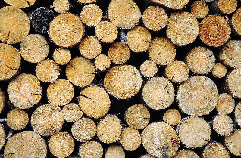 Το δάσος συνέλεξε και για το χειμώνα στοκ εικόνα