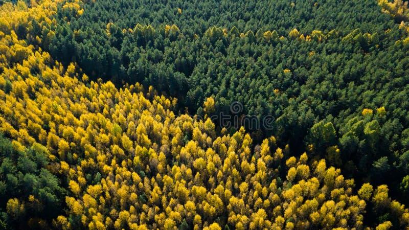 Το δάσος φθινοπώρου των πεύκων και άλλων δέντρων που είναι σημεία και δημιούργησαν μια άνετη διάθεση του μαγικού φθινοπώρου Πυροβ στοκ εικόνες