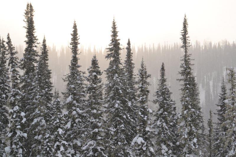 Το δάσος χιονιού, σχέδιο, έφαγε, φως, ευγενές στοκ φωτογραφίες