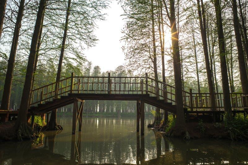 Το δάσος Lizhongshuishang ή το δάσος νερού λι Zhong είναι ο φυσικός οικολογικός φραγμός οξυγόνου, είναι ένα καλό μέρος για το αστ στοκ εικόνα με δικαίωμα ελεύθερης χρήσης
