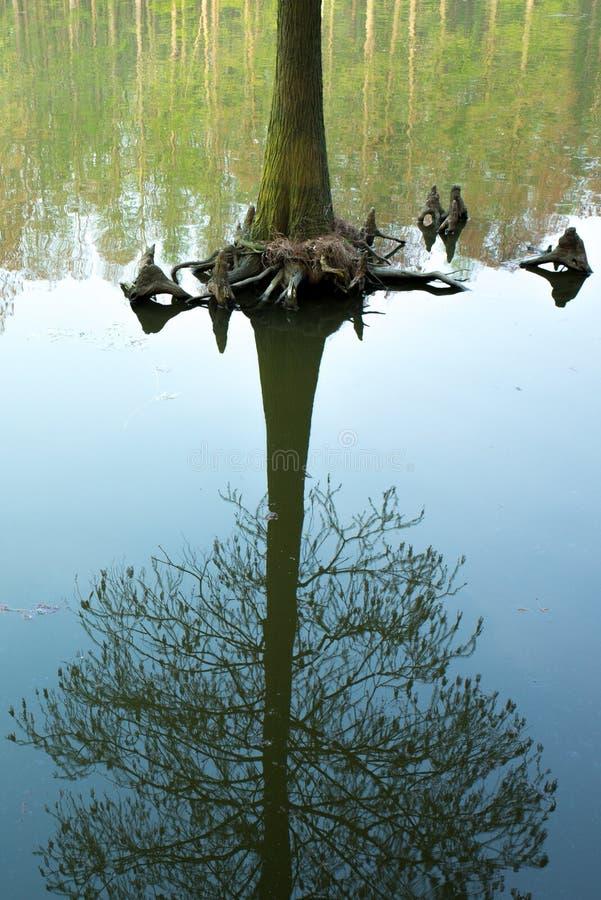 Το δάσος Lizhongshuishang ή το δάσος νερού λι Zhong είναι ο φυσικός οικολογικός φραγμός οξυγόνου, είναι ένα καλό μέρος για το αστ στοκ φωτογραφίες
