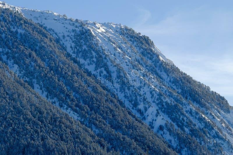 Το δέντρο κάλυψε χιονώδες αλπικό mountainside στοκ εικόνες με δικαίωμα ελεύθερης χρήσης