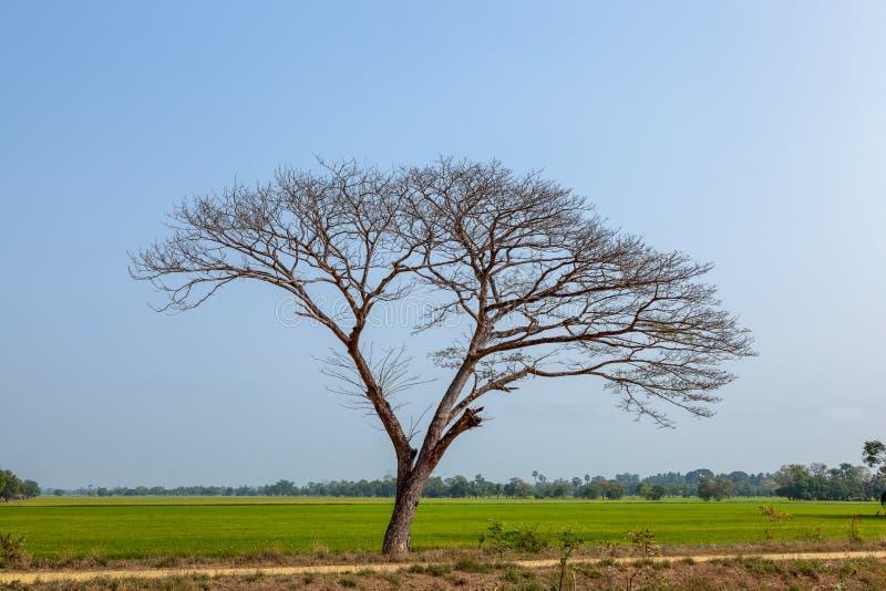 Το δέντρο και η χλόη είναι νεκρά στον τομέα στοκ εικόνες