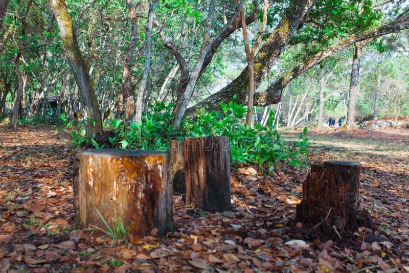 Το δέντρο κόπηκε, αφήνοντας μόνο ένα κολόβωμα στοκ εικόνα