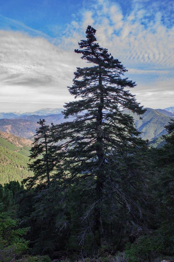 Το δέντρο μόνο στην οροσειρά Bermeja στοκ φωτογραφίες