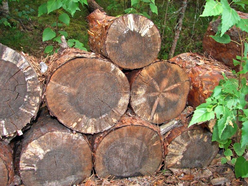 Το δέντρο περικοπών για την ξύλινη βιομηχανία στοκ φωτογραφίες με δικαίωμα ελεύθερης χρήσης