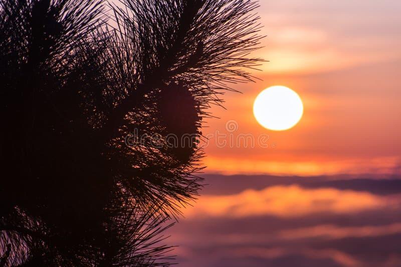 Το δέντρο πεύκων διακλαδίζεται πάνω από την ΑΜ Χάμιλτον, San Jose, περιοχή κόλπων του νότιου Σαν Φρανσίσκο  όμορφο ηλιοβασίλεμα π στοκ εικόνα με δικαίωμα ελεύθερης χρήσης