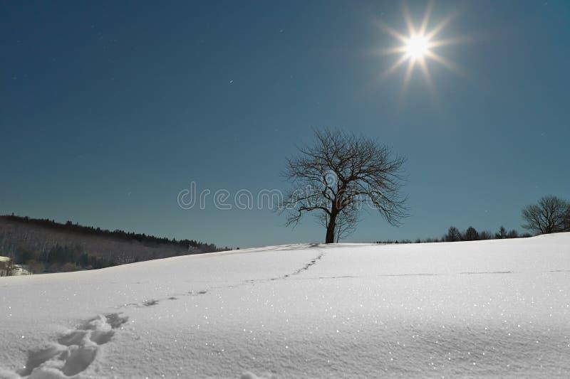 Το δέντρο στο χιόνι φωτίζει από τη πανσέληνο τη νύχτα. στοκ φωτογραφία με δικαίωμα ελεύθερης χρήσης