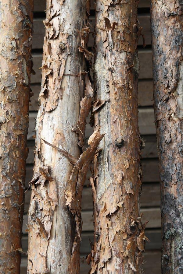 Το δέντρο συνδέεται το Lapland, Φινλανδία στοκ εικόνες