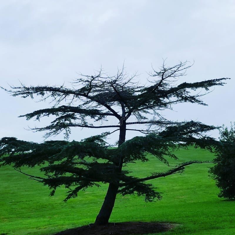 Το δέντρο της ζωής στοκ εικόνες