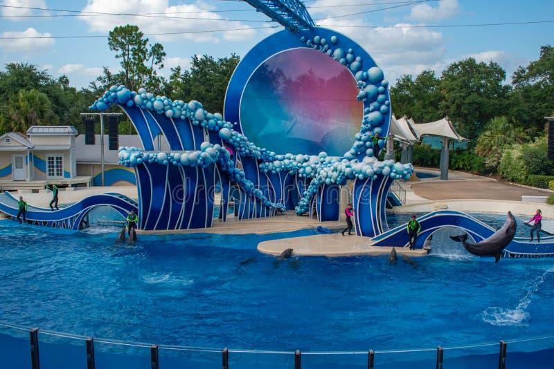 Το δελφίνι που πηδά στην αφή τον ουρανό παρουσιάζει από τον ηλεκτρικό ωκεανό σε Seaworld 1 στοκ φωτογραφίες