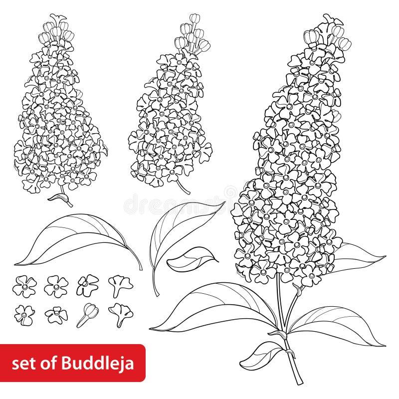 Το διάνυσμα έθεσε με την περίληψη Buddleja ή το λουλούδι θάμνων πεταλούδων, το περίκομψες φύλλο και τη δέσμη στο Μαύρο που απομον διανυσματική απεικόνιση