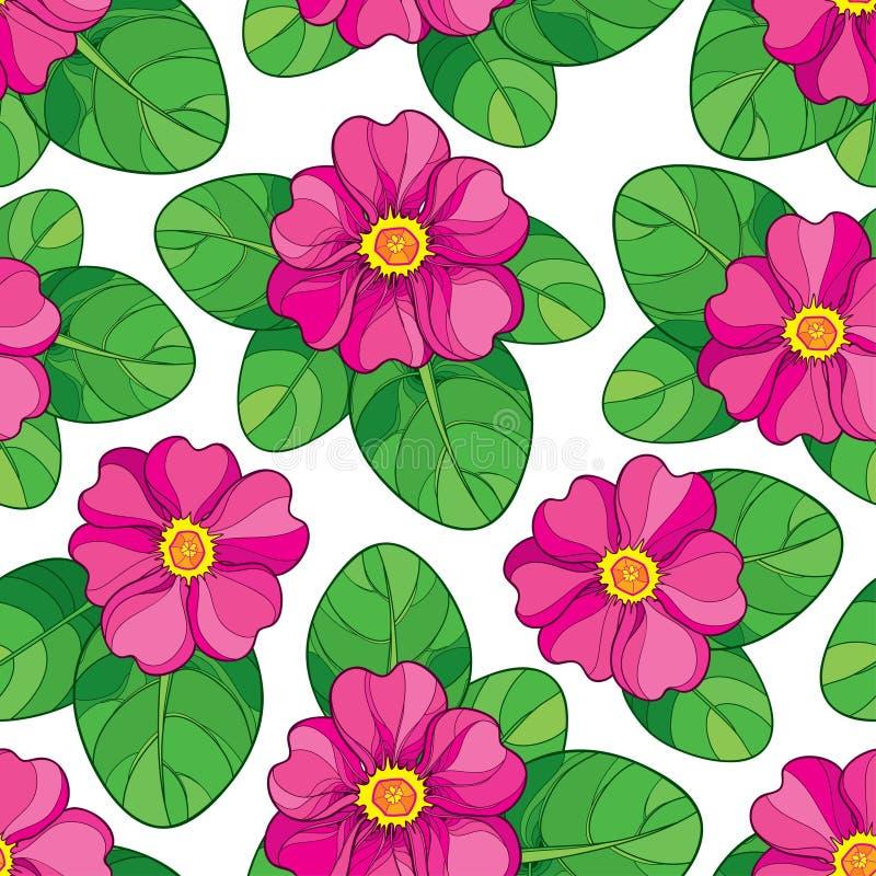 Το διανυσματικό άνευ ραφής σχέδιο με την περίληψη ρόδινο Primula ή Primrose ανθίζει και πράσινα φύλλα στο άσπρο υπόβαθρο διανυσματική απεικόνιση
