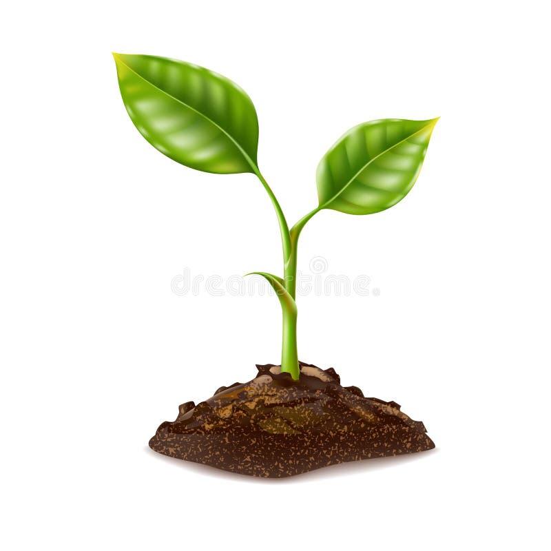Το διανυσματικό ρεαλιστικό πράσινο σπορόφυτο αυξάνεται στο χώμα ελεύθερη απεικόνιση δικαιώματος
