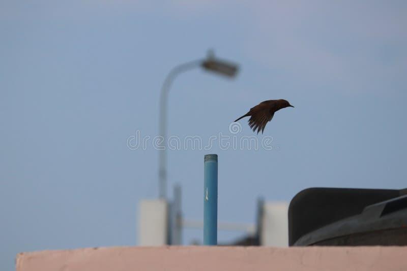 Το δυνατό πέταγμα πουλιών στοκ εικόνες