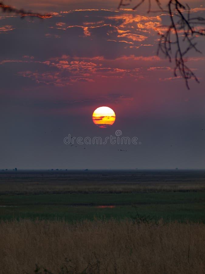 Το εθνικό πάρκο Chobe μεταξύ της Μποτσουάνα και της Ναμίμπια στο ηλιοβασίλεμα, Αφρική στοκ εικόνα με δικαίωμα ελεύθερης χρήσης