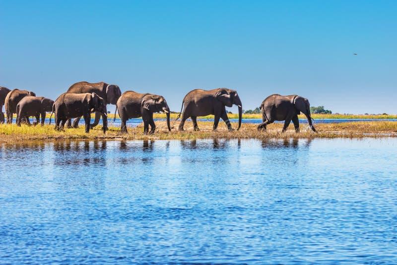 Το εθνικό πάρκο Chobe στοκ φωτογραφίες