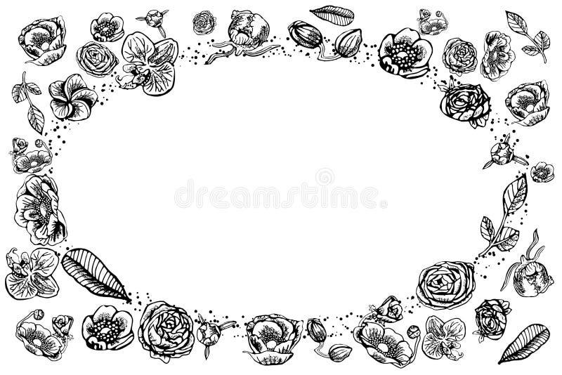 Το εκλεκτής ποιότητας πλαίσιο της ορχιδέας, peony, αυξήθηκε, βατράχιο, anemone, χλωρίδα plumeria, χέρι που σύρθηκε σε γραπτό ελεύθερη απεικόνιση δικαιώματος