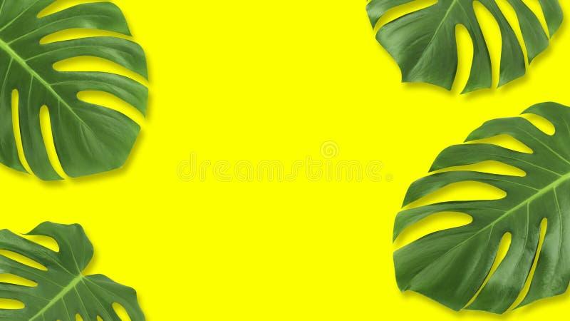 Το ελάχιστο επίπεδο σύνθεσης βάζει το πράσινο τροπικό φύλλο Ο δημιουργικός τροπικός κύκλος σχεδιαγράμματος αφήνει το πλαίσιο με τ ελεύθερη απεικόνιση δικαιώματος