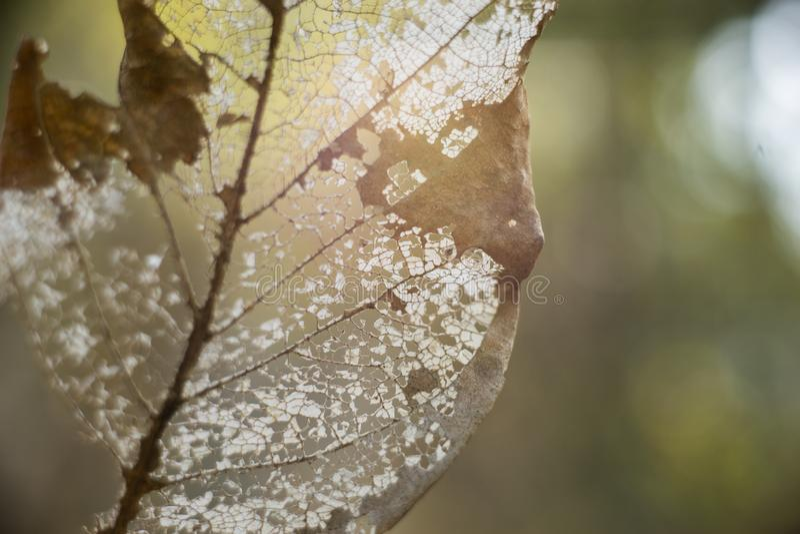 Το ενιαίο ξηρό φύλλο στοκ εικόνες