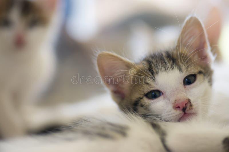 Το λευκό η γάτα στοκ εικόνες με δικαίωμα ελεύθερης χρήσης