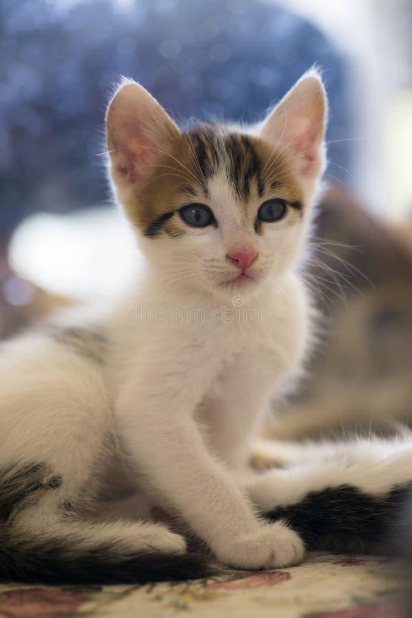 Το λευκό η γάτα στοκ φωτογραφίες