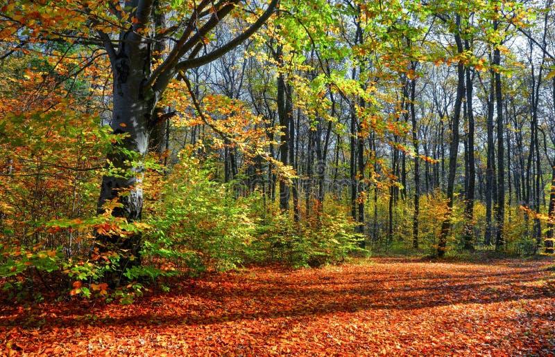Το ευρύ ίχνος που καλύπτεται με τα πεσμένα φύλλα, στις πλευρές των οποίων αυξηθείτε τα δέντρα με τα ακόμα πράσινα και ήδη κίτρινα στοκ φωτογραφία με δικαίωμα ελεύθερης χρήσης