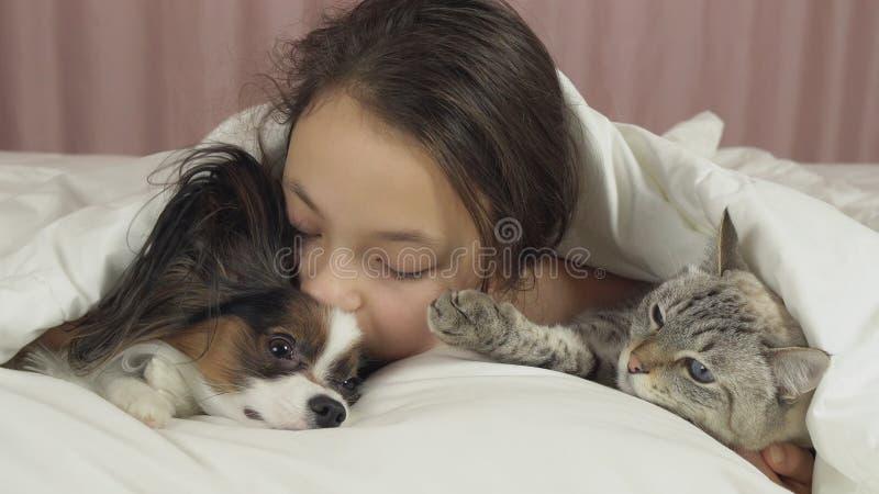 Το ευτυχές κορίτσι εφήβων επικοινωνεί με το σκυλί Papillon και την ταϊλανδική γάτα στο κρεβάτι στοκ εικόνα