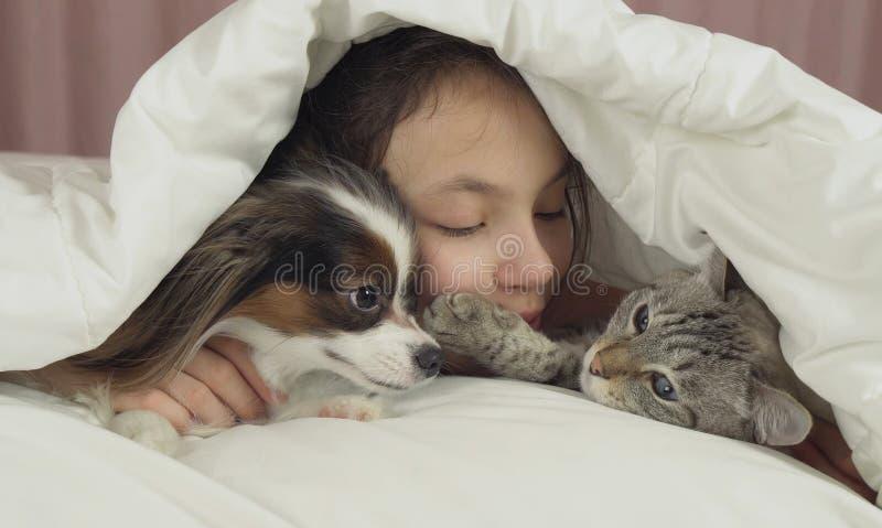 Το ευτυχές κορίτσι εφήβων επικοινωνεί με το σκυλί Papillon και την ταϊλανδική γάτα στο κρεβάτι στοκ φωτογραφίες