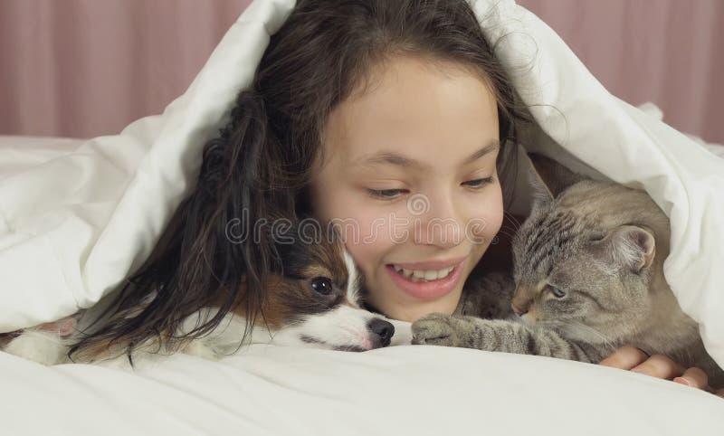 Το ευτυχές κορίτσι εφήβων επικοινωνεί με το σκυλί Papillon και την ταϊλανδική γάτα στο κρεβάτι στοκ φωτογραφία