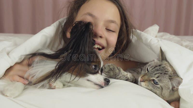 Το ευτυχές κορίτσι εφήβων επικοινωνεί με το σκυλί Papillon και την ταϊλανδική γάτα στο κρεβάτι στοκ φωτογραφίες με δικαίωμα ελεύθερης χρήσης