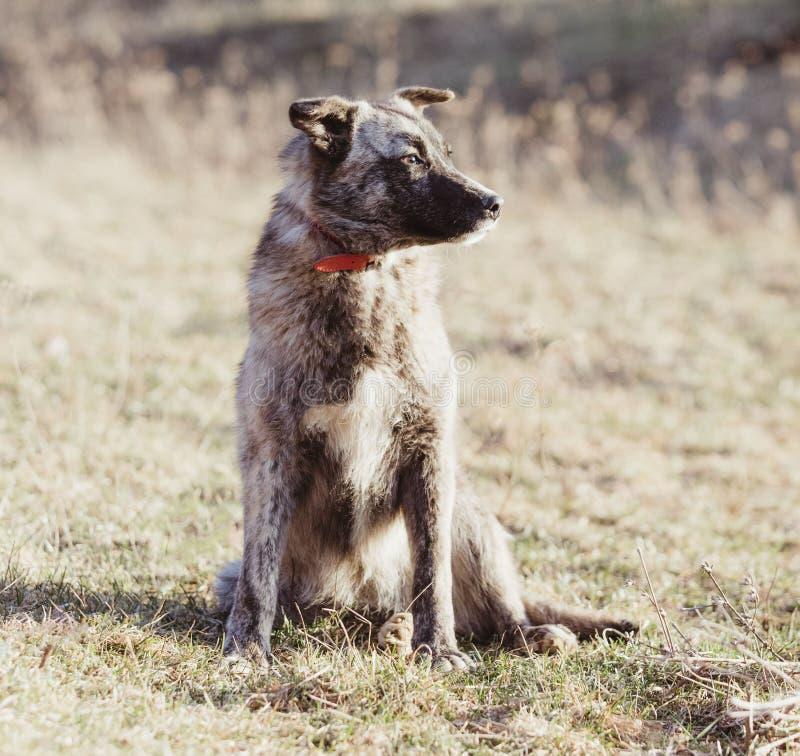 Το ευτυχές υιοθετημένο περιπλανώμενο σκυλί, υιοθετεί δεν ψωνίζει στοκ εικόνα