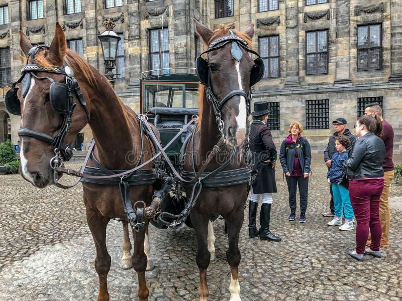 Το ζευγάρι των αλόγων σε μια μεταφορά τουριστών, Άμστερνταμ στοκ εικόνες με δικαίωμα ελεύθερης χρήσης