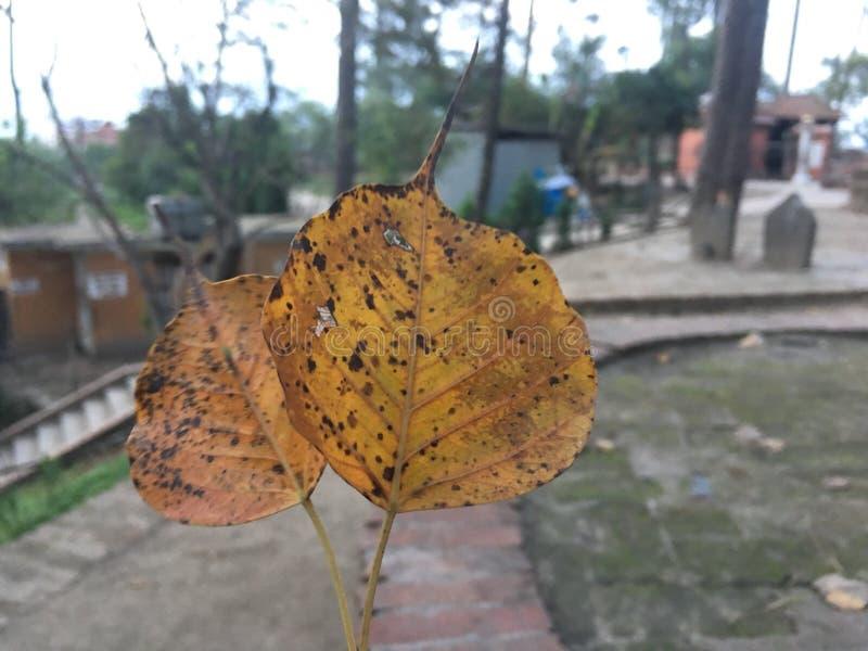 Το ζεύγος βγάζει φύλλα στοκ εικόνα με δικαίωμα ελεύθερης χρήσης