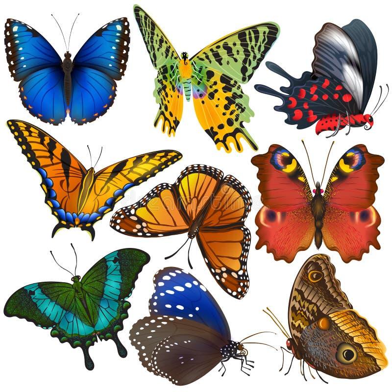Το ζωηρόχρωμο έντομο πεταλούδων που πετούν για τη διακόσμηση και τα όμορφα φτερά πεταλούδων πετούν την άνοιξη το σύνολο απεικόνισ απεικόνιση αποθεμάτων