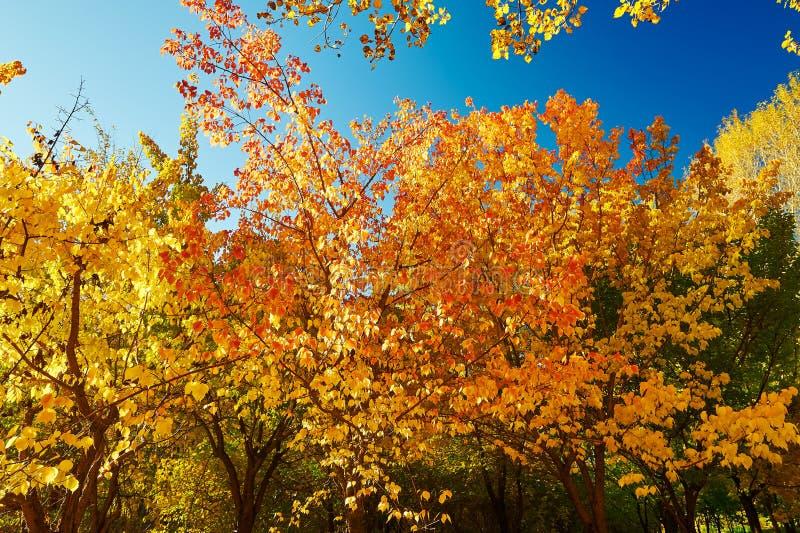 Το ζωηρόχρωμο τοπίο δέντρων φθινοπώρου στοκ φωτογραφίες
