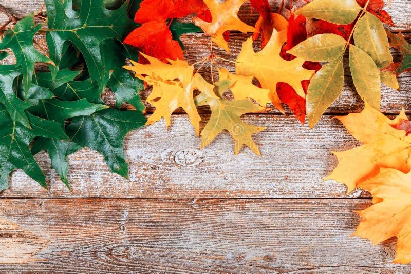 Το ζωηρόχρωμο φθινόπωρο αφήνει το πλαίσιο συνόρων στο χρωματισμένο αγροτικό υπόβαθρο κενών σιταποθηκών ξύλινο Κενό διάστημα στοκ εικόνες