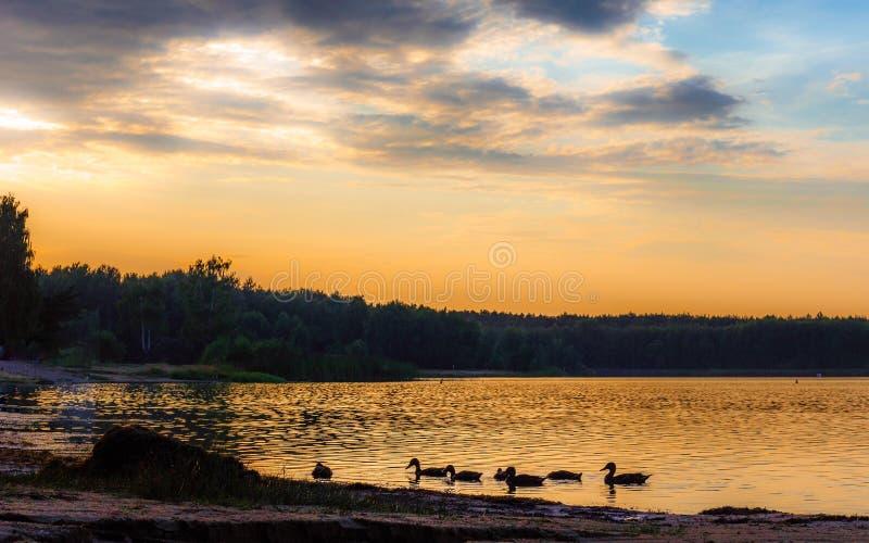 Το ηλιοβασίλεμα πέρα από την ψυχαγωγική λίμνη, εσείς μπορεί να δει τις πάπιες και τις βάρκες Όμορφα πορτοκαλιά χρώματα, μεγάλα δι στοκ εικόνες