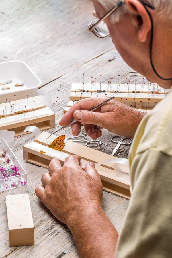 Το ηλικιωμένο άτομο διέδωσε τα φτερά πεταλούδων στοκ φωτογραφία με δικαίωμα ελεύθερης χρήσης