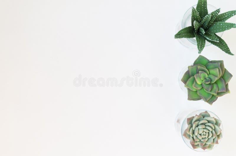 Το θερμοκήπιο φυτεύει σε δοχείο, succulentson καθαρίστε το άσπρο backg στοκ εικόνες με δικαίωμα ελεύθερης χρήσης