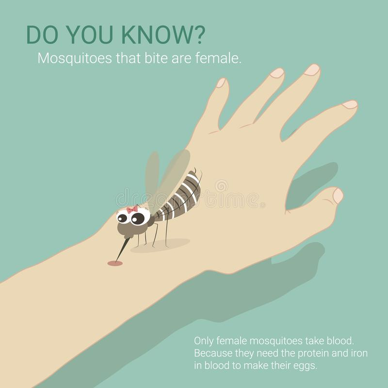 Το θηλυκό κουνούπι παίρνει το αίμα ελεύθερη απεικόνιση δικαιώματος